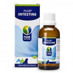 Intestine / Darm