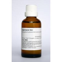 Pulmonaria officinalis phyto